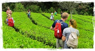 cheap tour packages in kerala