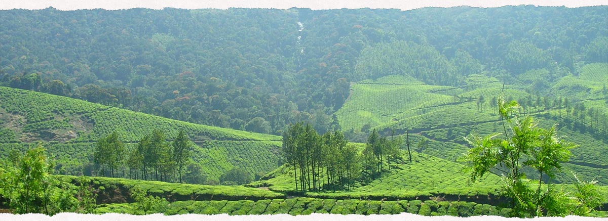 Coffee Routes resort thekkady